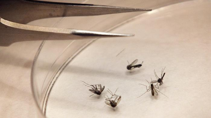 West Nile Virus Cases Surface In Southern Montana