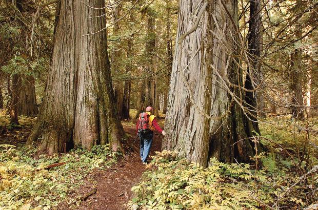 Ross Creek Giant Cedars Natural Area