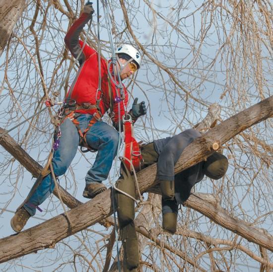 Firefighters, arborists study tree rescue | Local | billingsgazette com