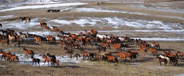Leachman Cattle Co. ranch