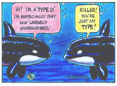 Type D whales