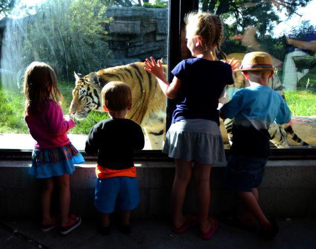 Kids watch Jasmine the tiger