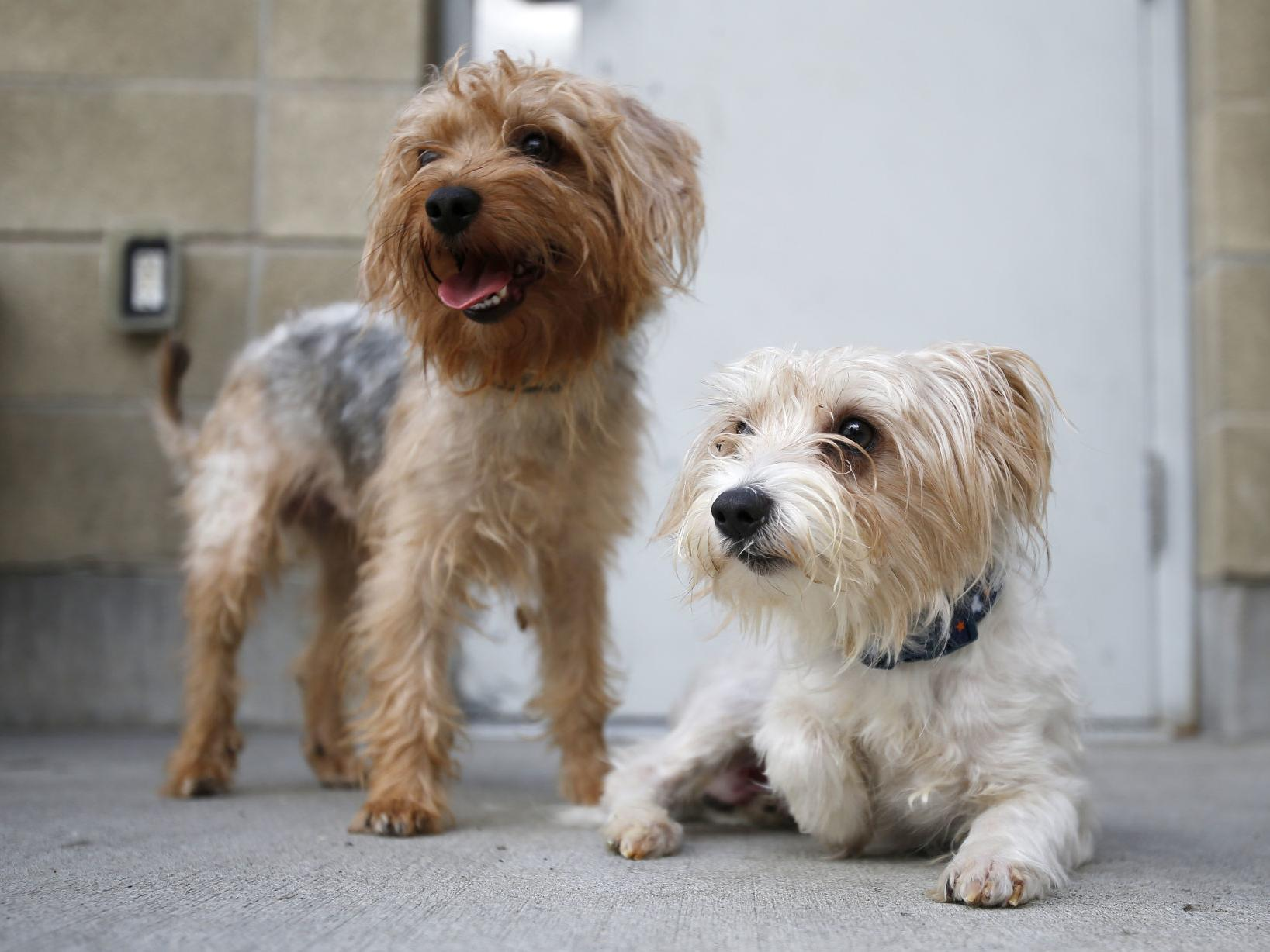 Billings Animal Shelter Adopting Out