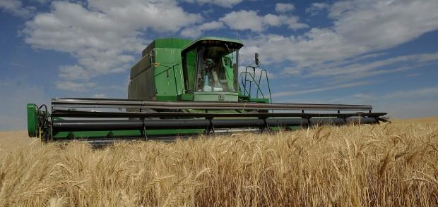 Wheat export