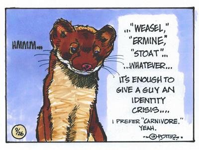 Weasel answers
