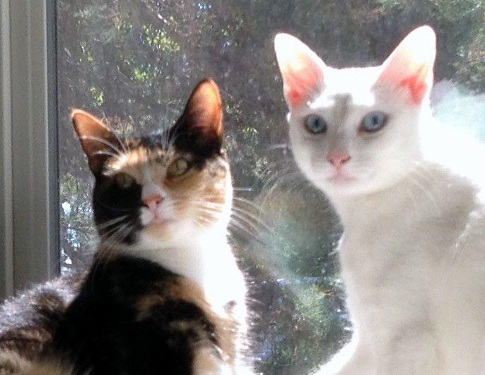 Pets of the week: Josie and Bella | Billings Gazette