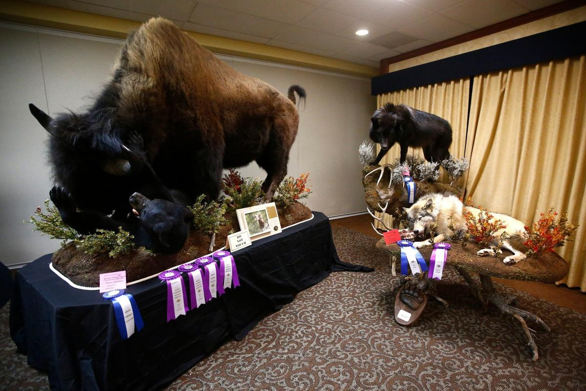 Montana Taxidermists Association Convention and competition