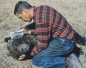 Noted grizzly bear researcher, conservationist Frank Craighead's papers provided to MSU