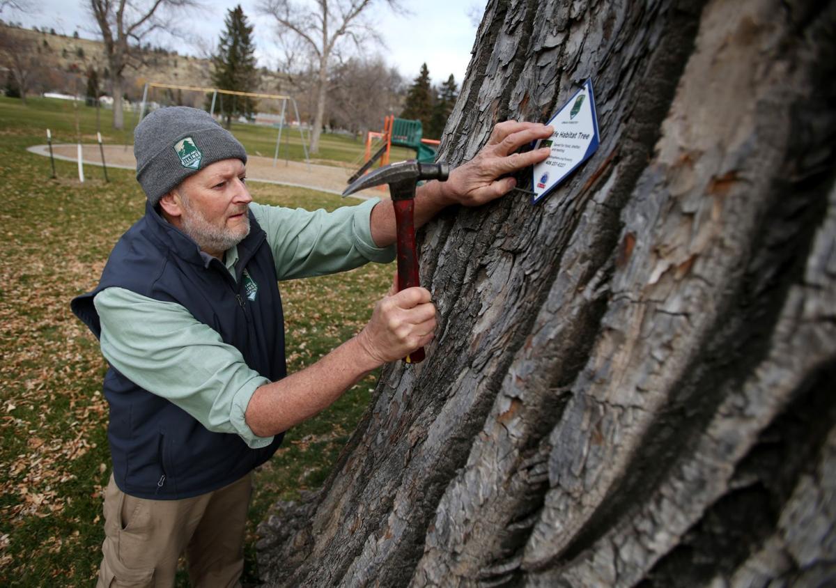 Billings city forester Steve McConnell