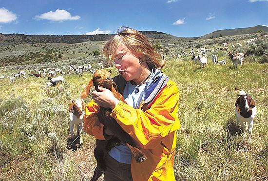 Virginia City uses goats to chew weeds