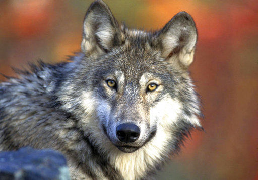 GOP targets Endangered Species Act as protections lifted