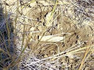Experts Studying Bighorn Battlefield Artifacts Montana