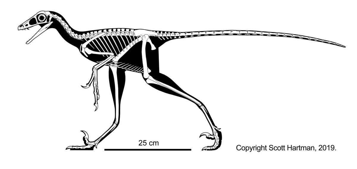 Lori skeletal