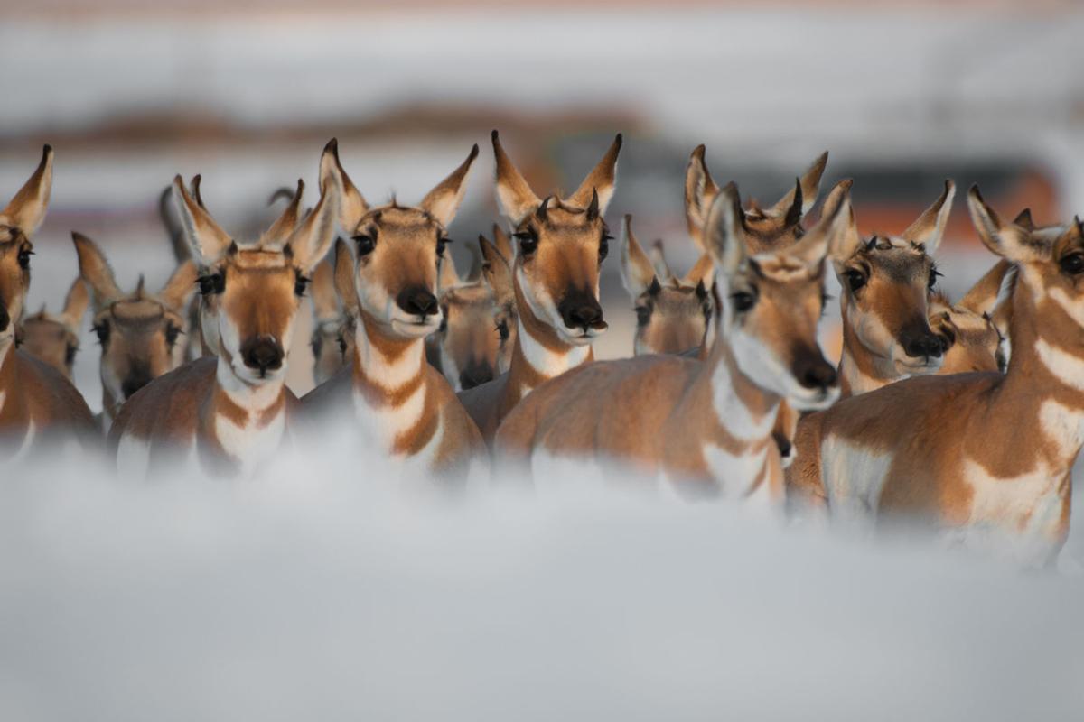 Yellowstone Migrations