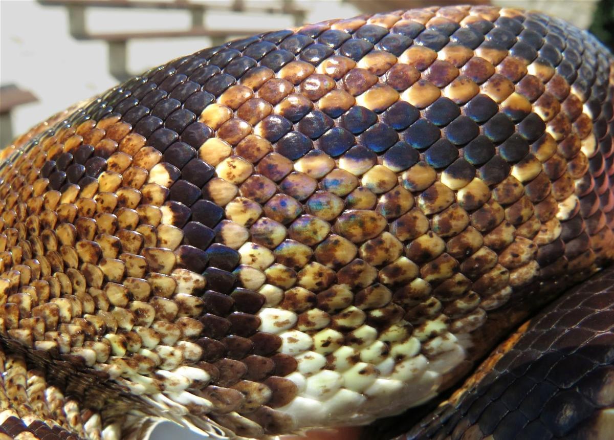 ZooMontana up close: Creatures are larger than life through