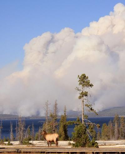 Yellowstone Fire