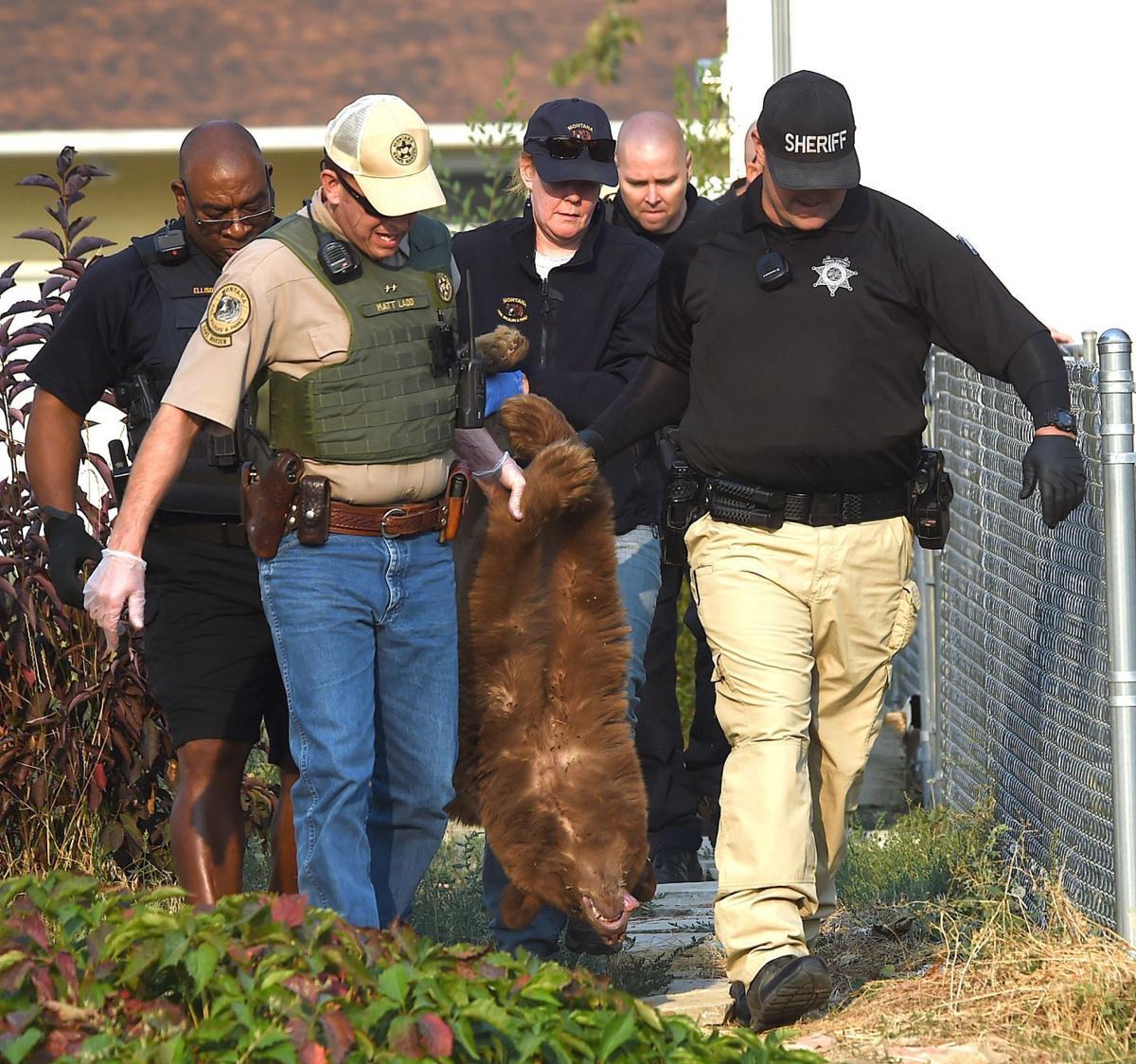 Bear carry