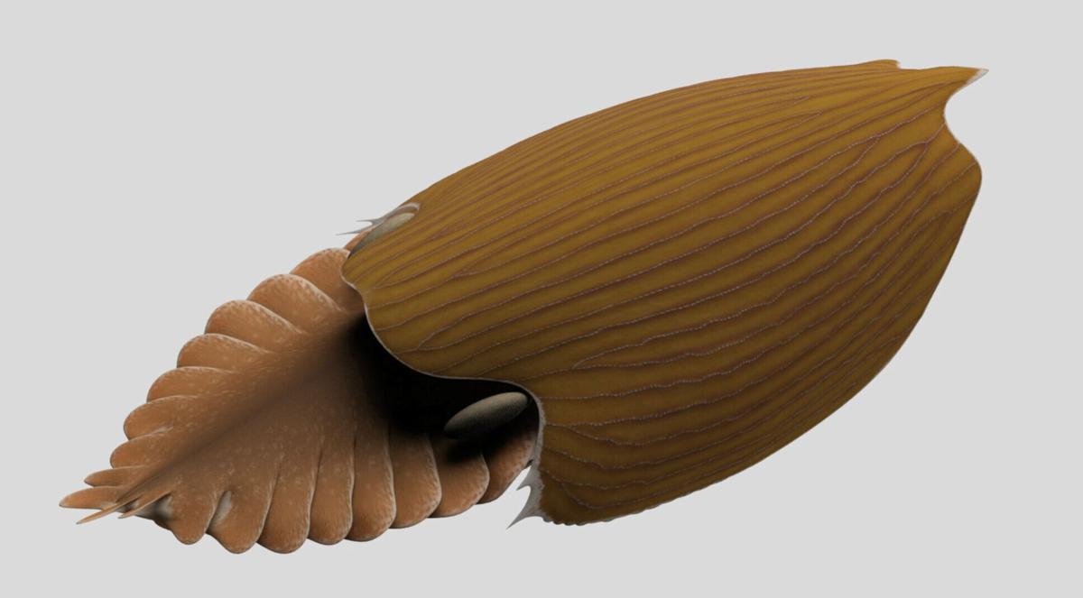 Giant 'swimming head' creature lived in our oceans 500 million years ago