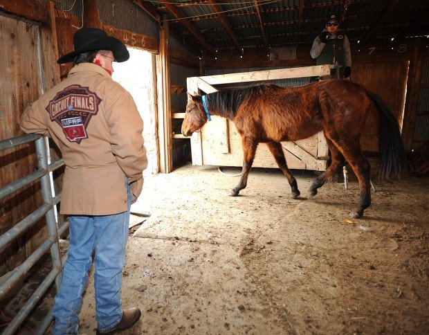 Leachman horse sale expected to start Saturday | Local