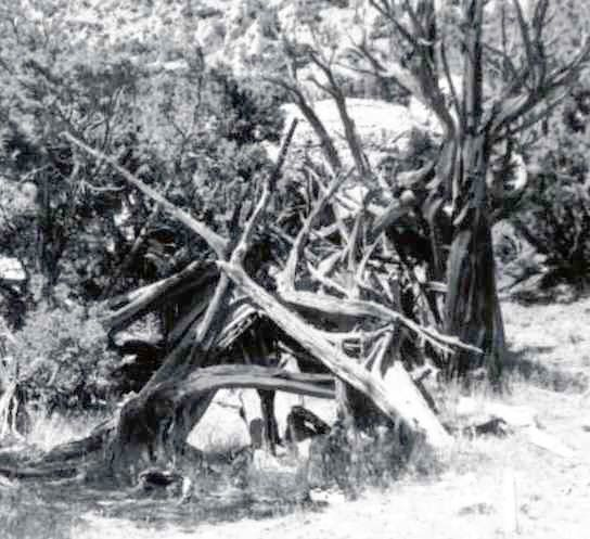 Old log structures