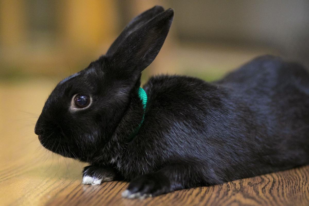 Pet of the week: Carrots