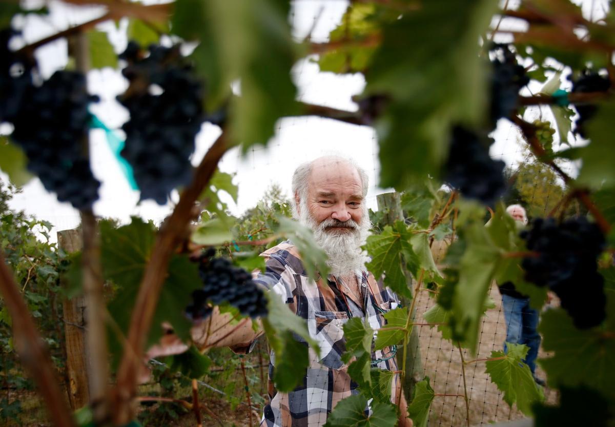 Laurel vineyard
