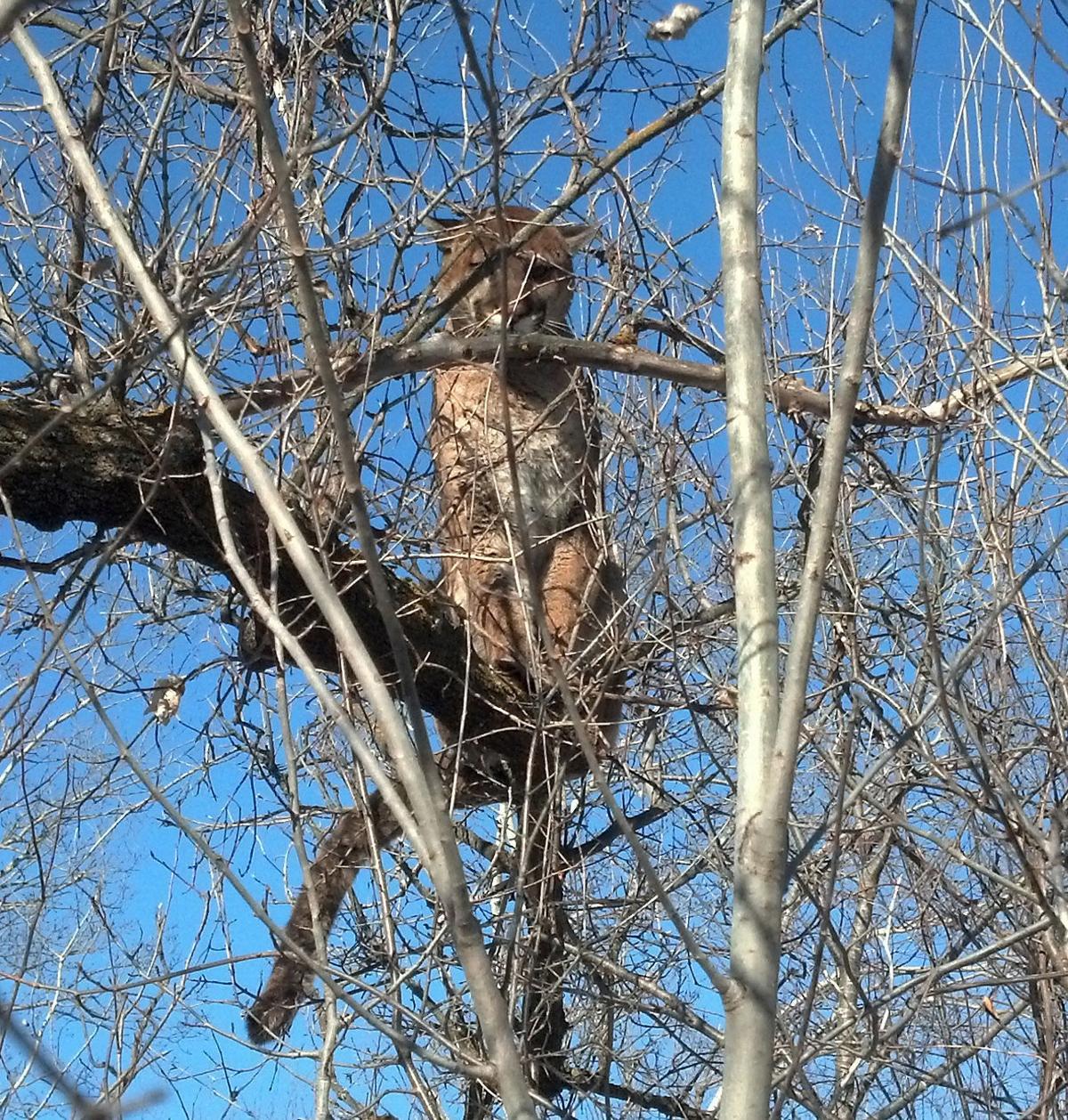 Treed cat