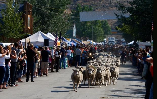 Sheep run down Division Street