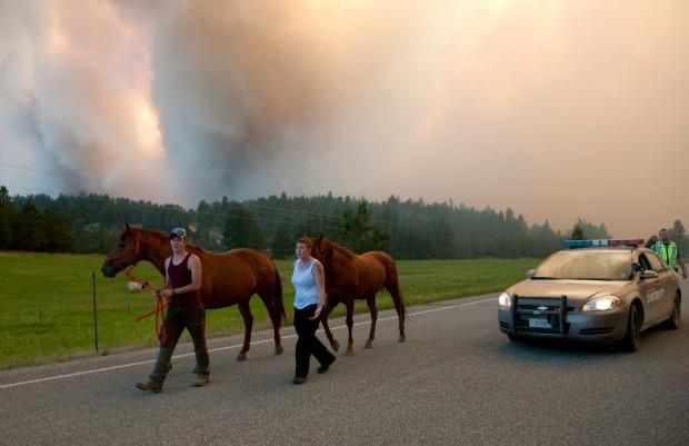People lead horses down Highway 87