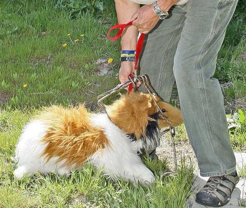 Dave Pauli trapped dog free
