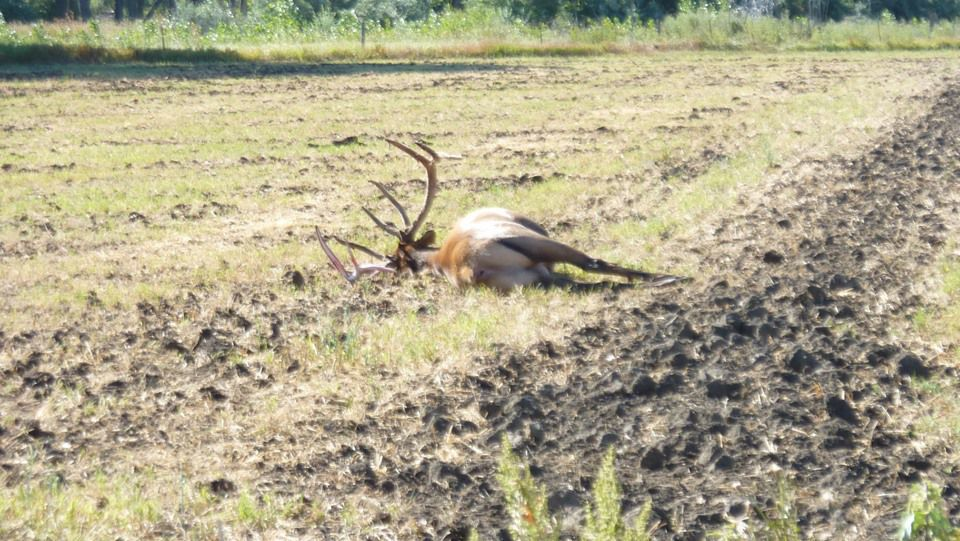 A dead bull elk found in Musselshell County over the weekend