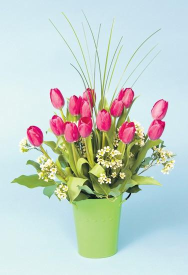 Jim Gainan: Tulips are one of the truest harbingers of spring
