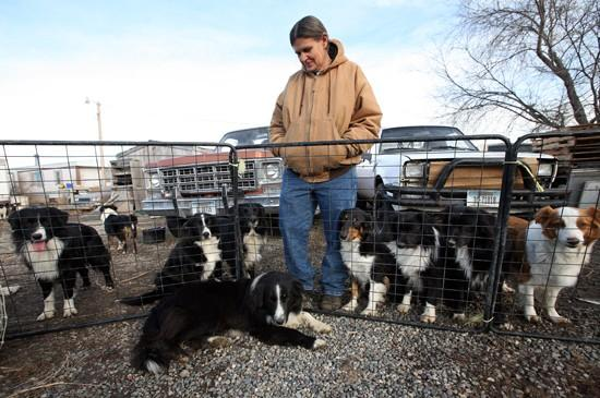 Kennel owner in court, denies felony cruelty charges