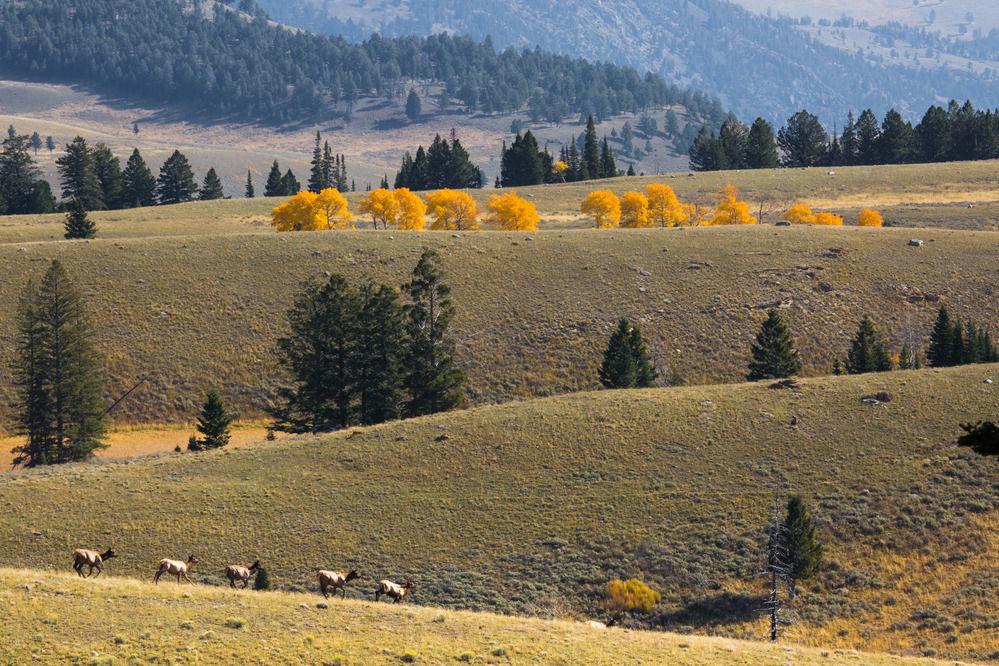 Scattering elk