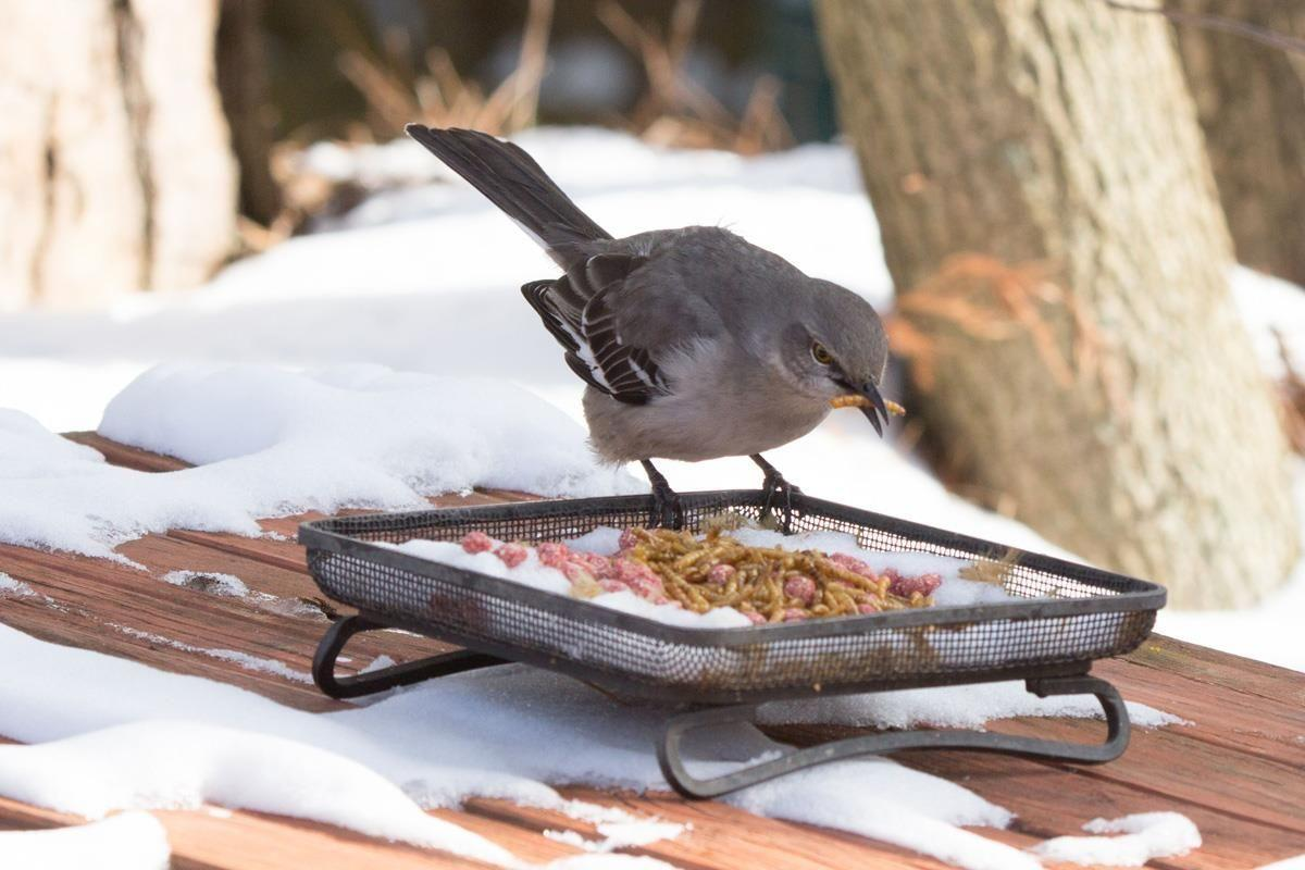 how to attract resident birds to your backyard during cold weather