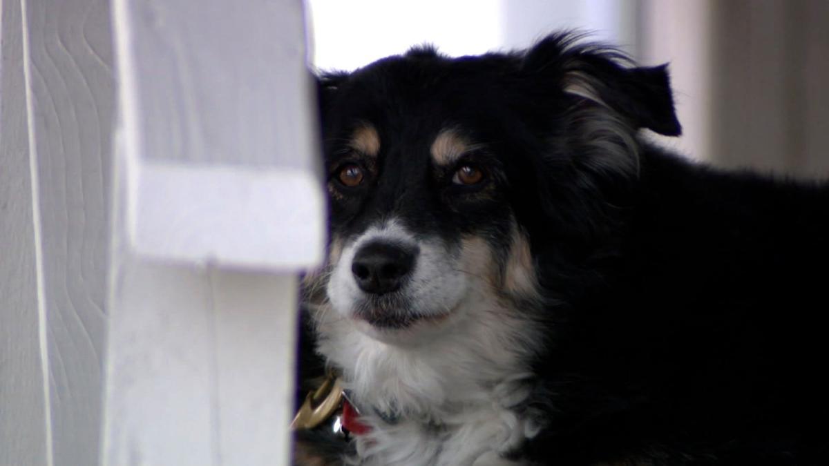 Lulu the dog 2