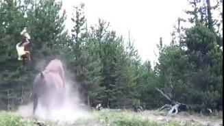Video: Bison charges, tosses 9-year-old girl in Yellowstone Park
