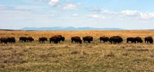 Montana nature reserve buys 46,000-acre ranch, advances goal of establishing wildlife park