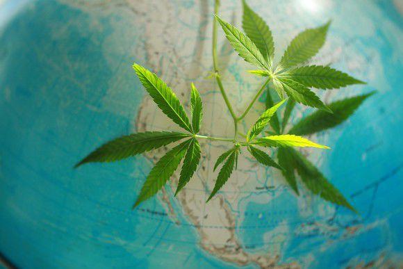 Better Marijuana Stock Aphria Inc. vs. Canopy Growth Corporation & Better Marijuana Stock: Aphria Inc. vs. Canopy Growth Corporation ...