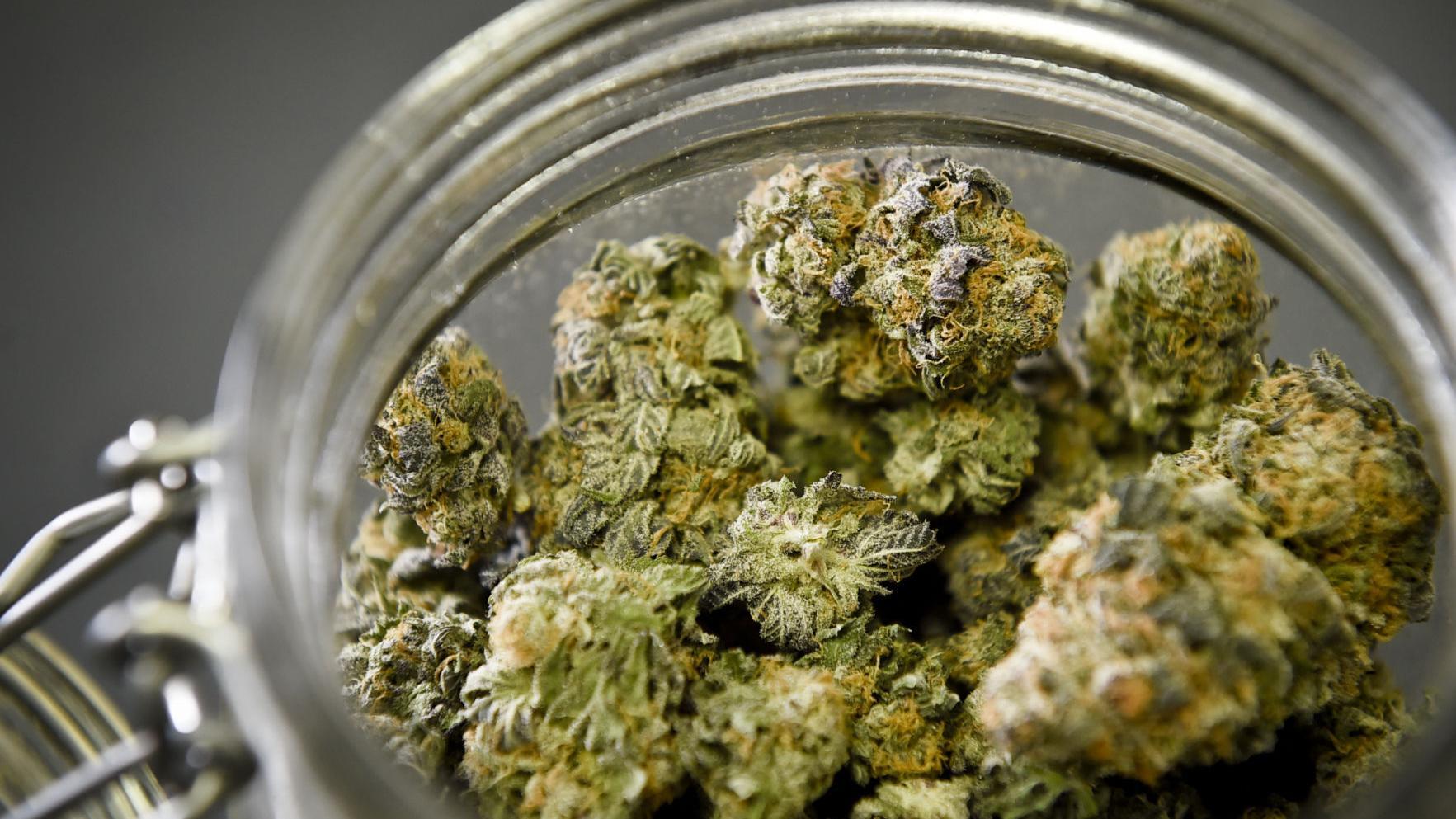 Montana health department sets temporary rules for medical marijuana
