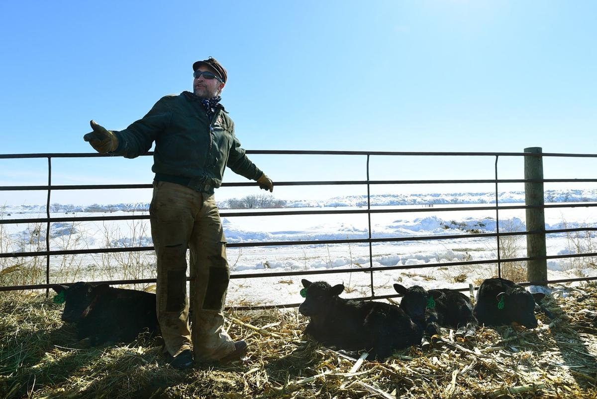 Martin cattle check