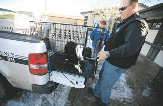 15 seized dogs get warmer home