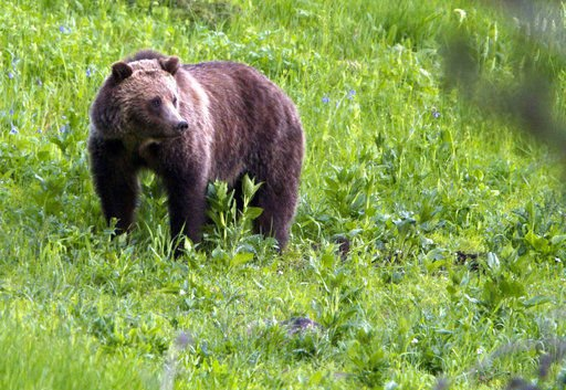 Grizzly protections