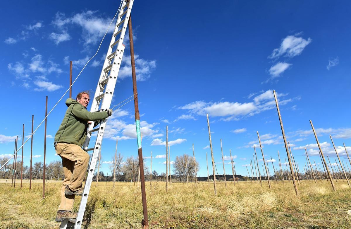 Hop farm ladder