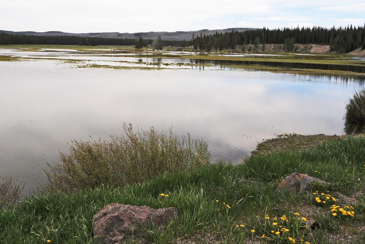 Pelican Creek