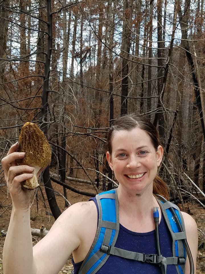 Large morel mushroom