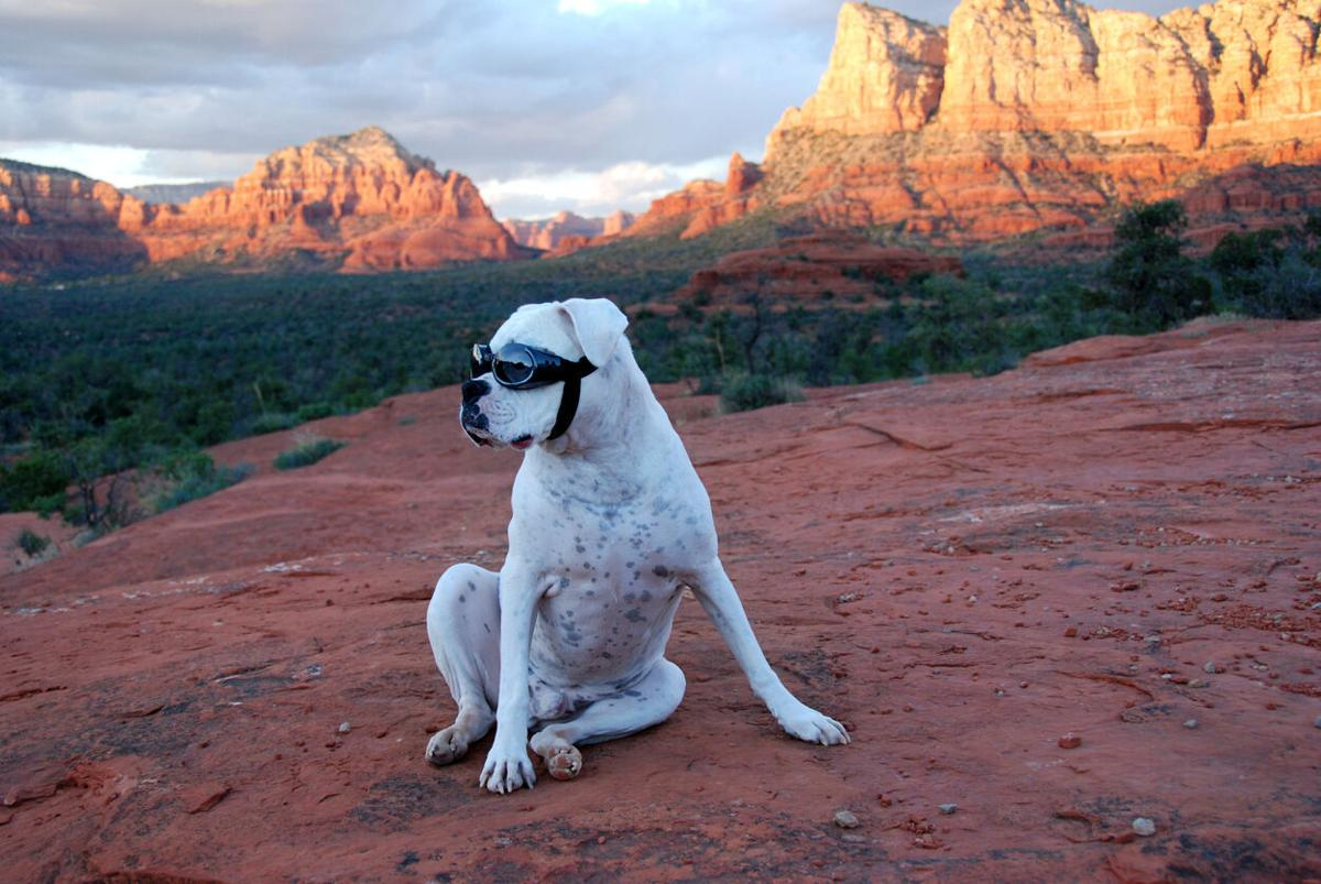 Day-tripping with your dog (image)