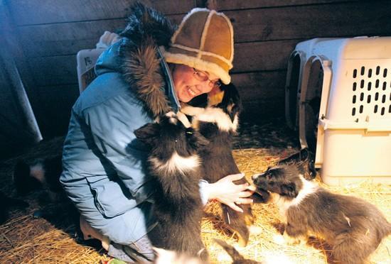 Volunteers brighten seized dogs' lives