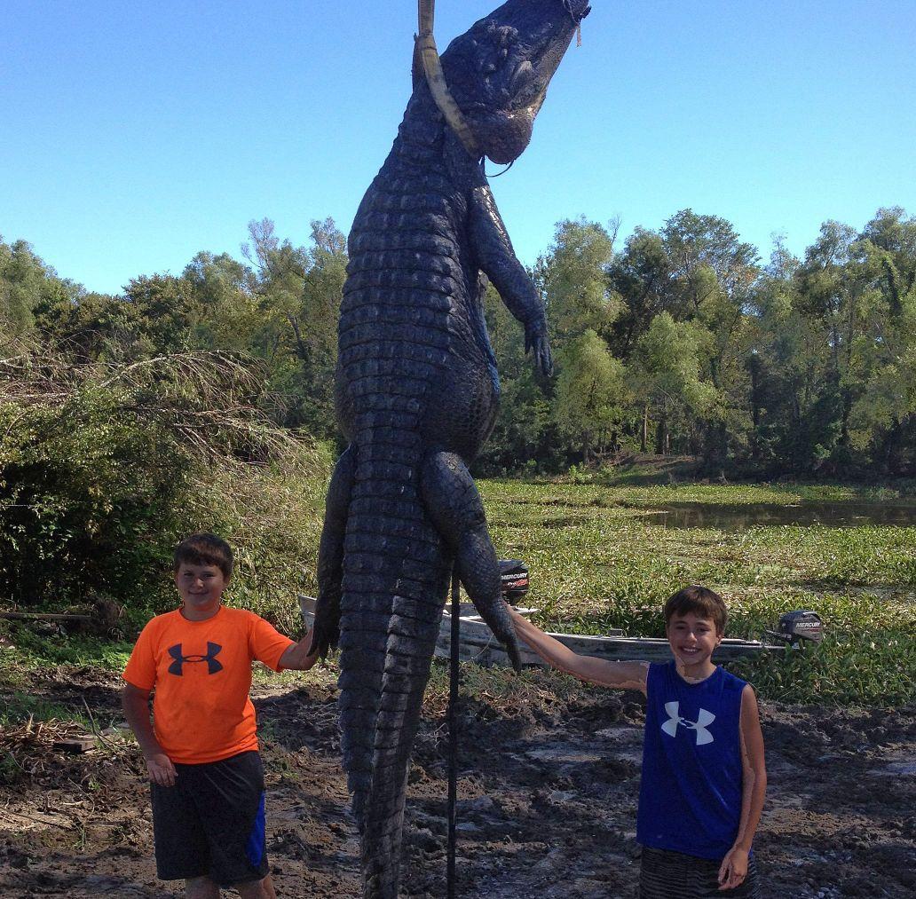 Dwarfed by a gator