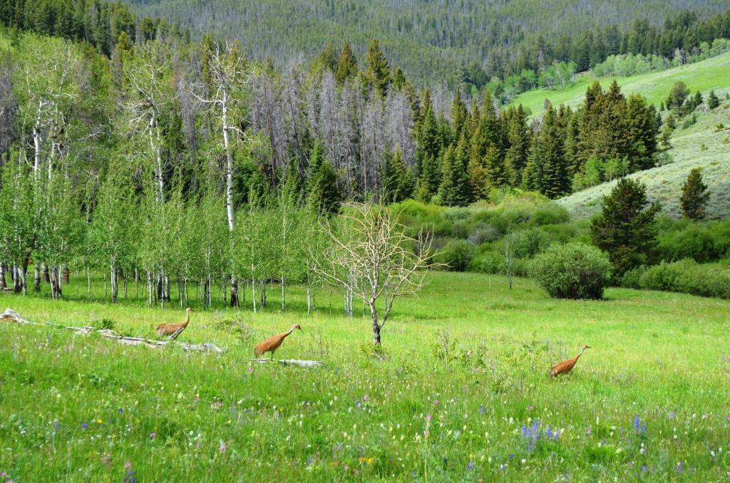 Holmstrom Sheep Creek Ranch